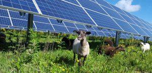 Agrivoltaico, la svolta energetica dell'agricoltura